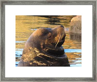 Happy And Content Framed Print