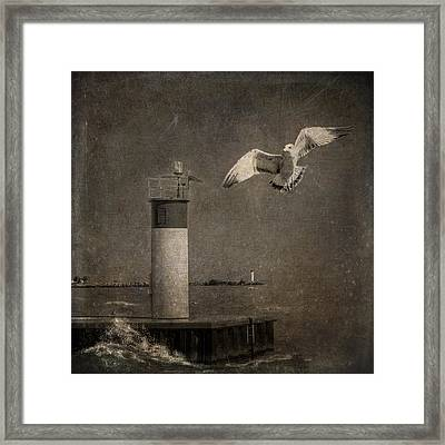 Happy And Free As A Seagull Framed Print