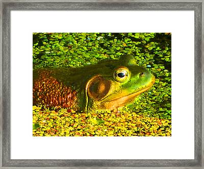 Happy As A Frog In A Pond Framed Print