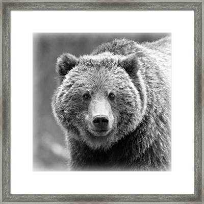 Happy Bear Framed Print