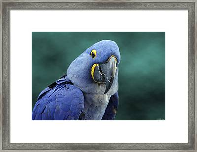 Happy Bird Framed Print by David Simons
