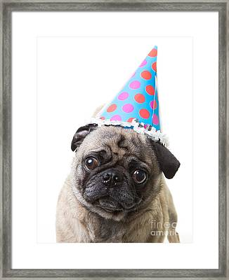 Happy Birthday Pug Card Framed Print by Edward Fielding