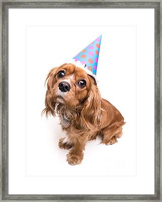 Happy Birthday Puppy Framed Print
