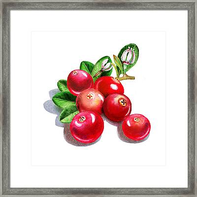 Happy Cranberry Bunch Framed Print by Irina Sztukowski
