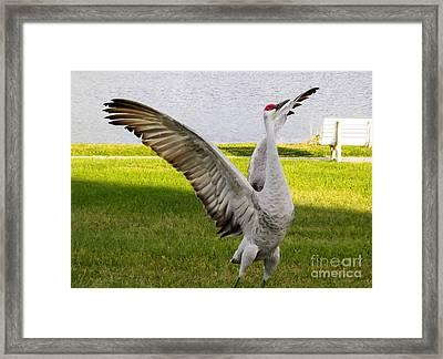 Happy Crane Framed Print