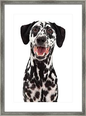 Happy Dalmatian Dog Smiling Framed Print by Susan Schmitz