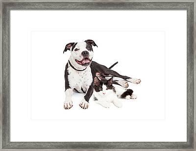 Happy Dog And Kitten Together Framed Print