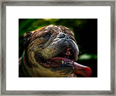 Framed Print featuring the photograph Happy Dog by Bob Orsillo