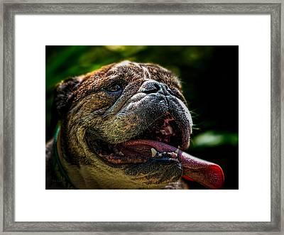 Happy Dog Framed Print by Bob Orsillo
