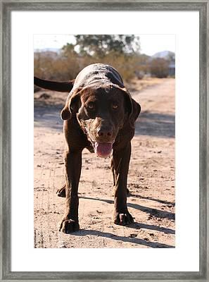Happy Dog Framed Print by Wendi Matson