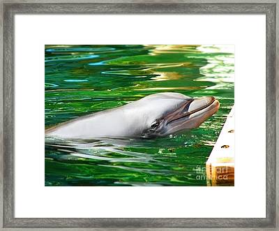 Framed Print featuring the photograph Happy Dolphin by Kristine Merc