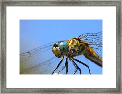 Happy Dragonfly Framed Print