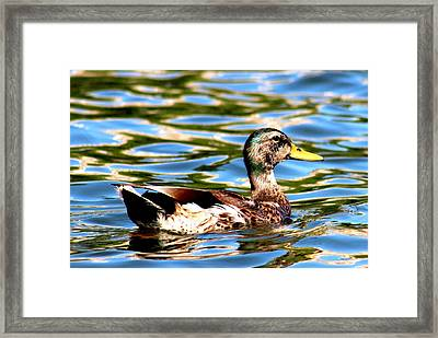 Happy Duck Framed Print