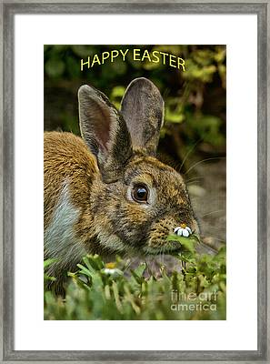 Happy Easter Framed Print by Anne Rodkin