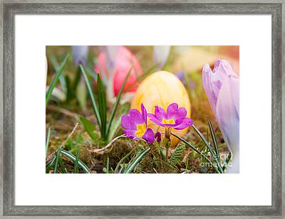 Framed Print featuring the photograph Happy Easter by Christine Sponchia