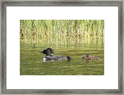 Happy Family Framed Print by Penny Meyers
