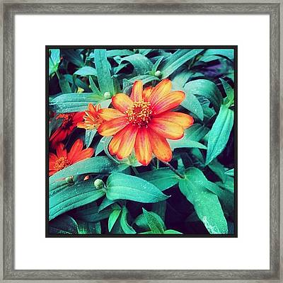 Happy Flower #igersoflouisiana #nature Framed Print