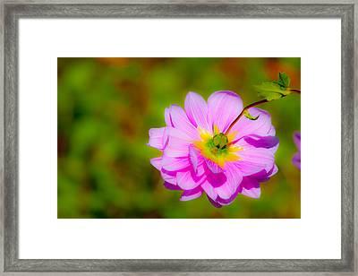 Happy Flower Framed Print by Karol Livote