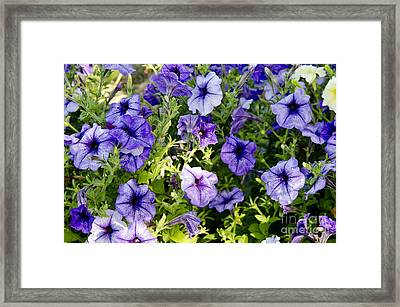 Happy Flowers Framed Print by Wilma  Birdwell