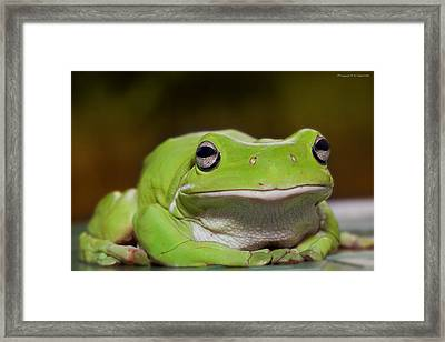 Happy Frog 0003 Framed Print by Kevin Chippindall