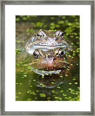 Happy Frogs Framed Print