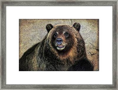 Happy Grizzly Bear Framed Print