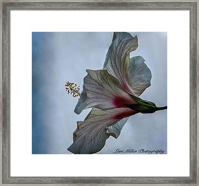 Happy Hibiscus At Biltmore Conservatory Framed Print