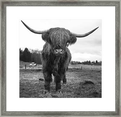 Happy Highland Cow Framed Print