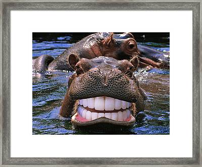 Happy Hippo Framed Print