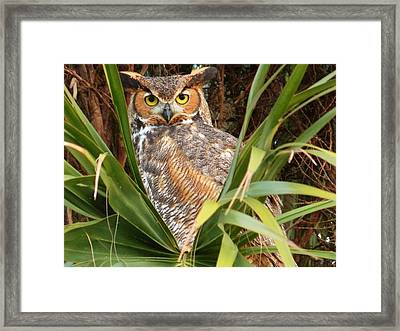Happy Hooter Framed Print by Elaine Franklin