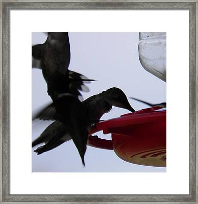 Framed Print featuring the photograph Happy Hour by Nick Kirby