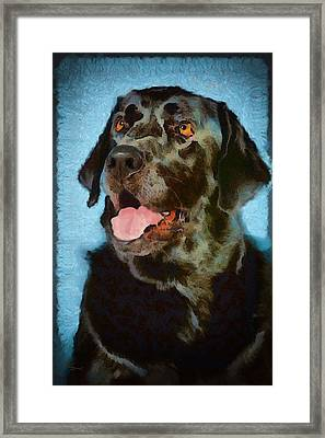 Happy Lab Framed Print by Angel Pachkowski