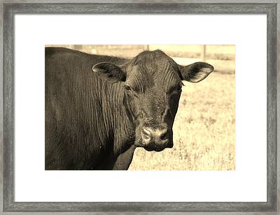 Happy Mama Cow Framed Print