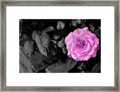 Happy Mother's Day Framed Print by Donald Chen