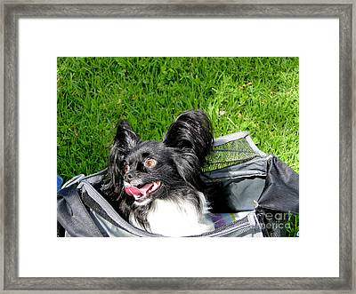 Happy Papillon In A Bag Framed Print