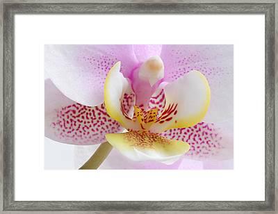 Happy Pink Framed Print