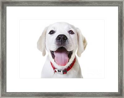 Happy Puppy Framed Print by Diane Diederich