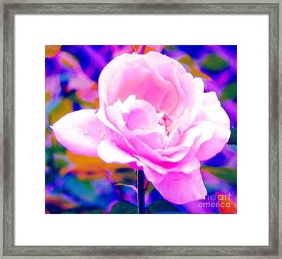 Happy Rose Framed Print by Kathleen Struckle