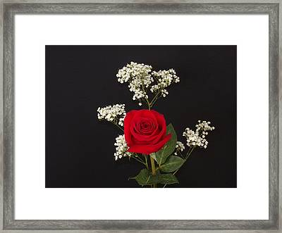 Happy Rose Framed Print