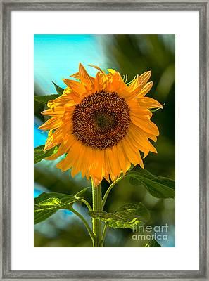 Happy Sunflower Framed Print by Robert Bales
