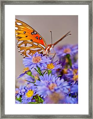 Happy To Be Here Framed Print