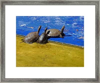 Happy Together  Framed Print by A Rey