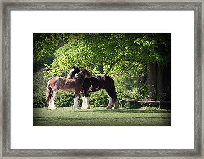 Happy Together Framed Print by Stephen Norris