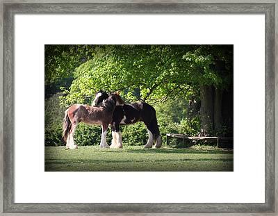 Happy Together Framed Print by Stephen Norris