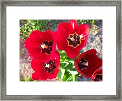 Framed Print featuring the photograph Happy Tulips by Belinda Lee