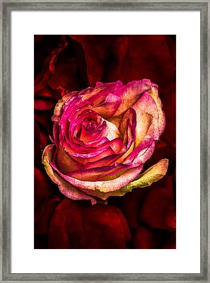 Happy Valentine's Day - 1 Framed Print by Alexander Senin
