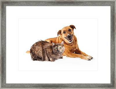 Happy Yellow Dog And Persian Cat Framed Print