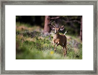 Happyyyyyyy... Framed Print
