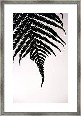 Hapu'u Frond Leaf Silhouette Framed Print