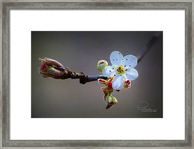 Framed Print featuring the photograph Harbinger Of Spring by Ludwig Keck